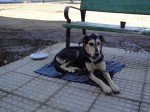 Tara kutya