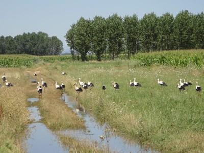 Sok gólya