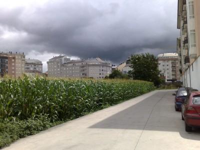 kukoricatábla Sarriaban