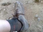 Cipő - el camino